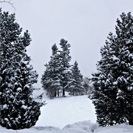 035 snow covered trees