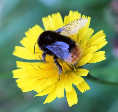 235 bumble bee pattern