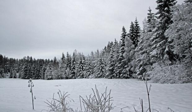 359 winter wonderland