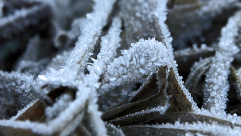 Frosty details