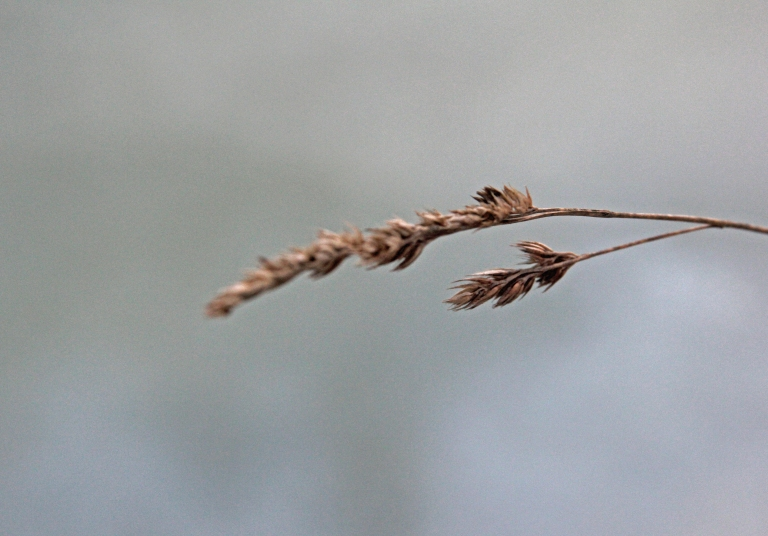 straw hanging