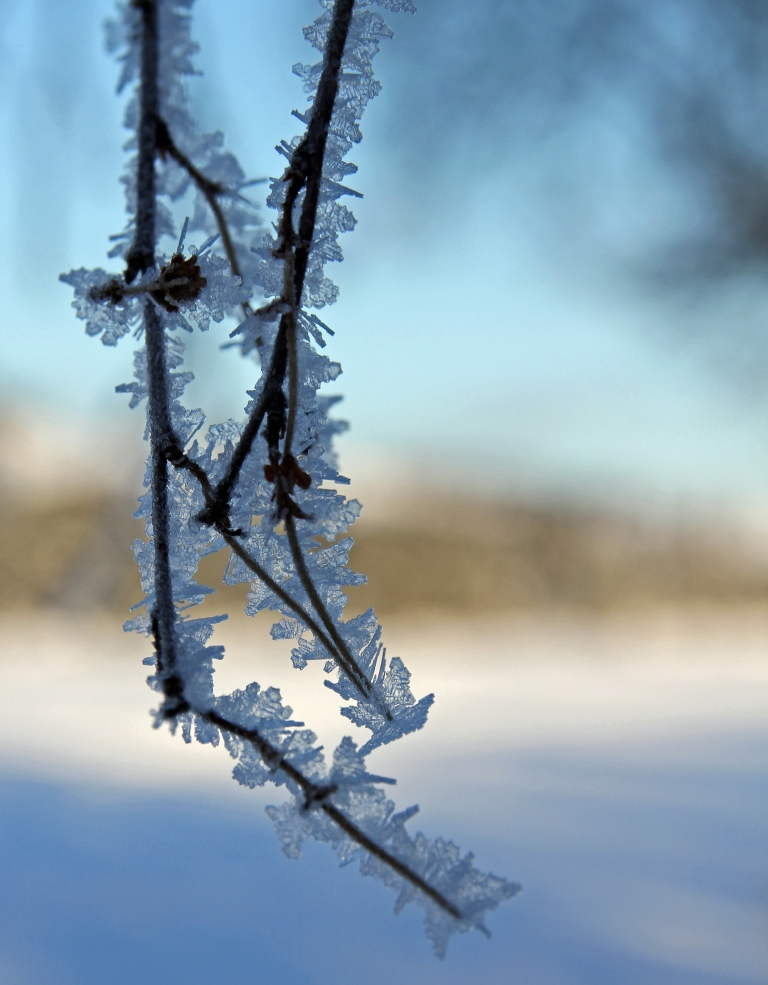 frosty twigs 2