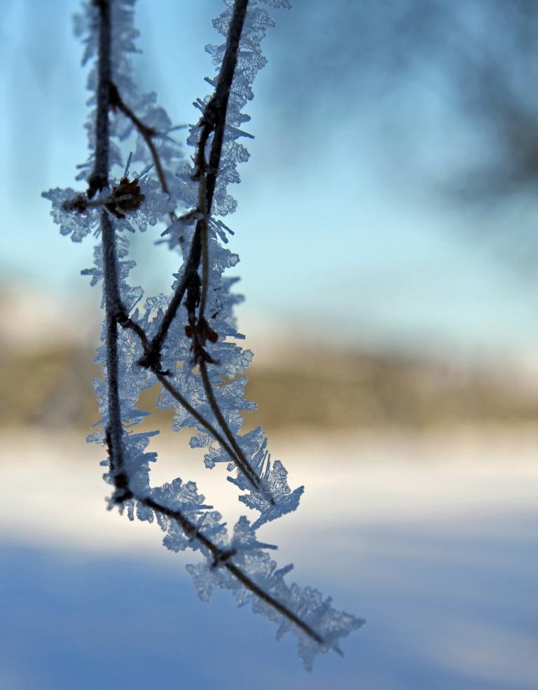 frosty twigs 2
