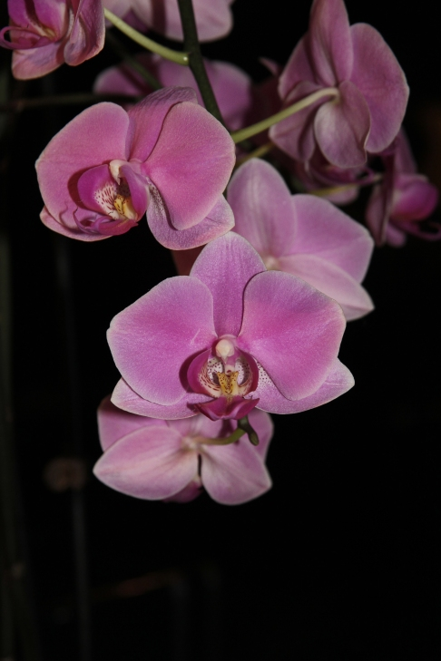 purple orchids 2