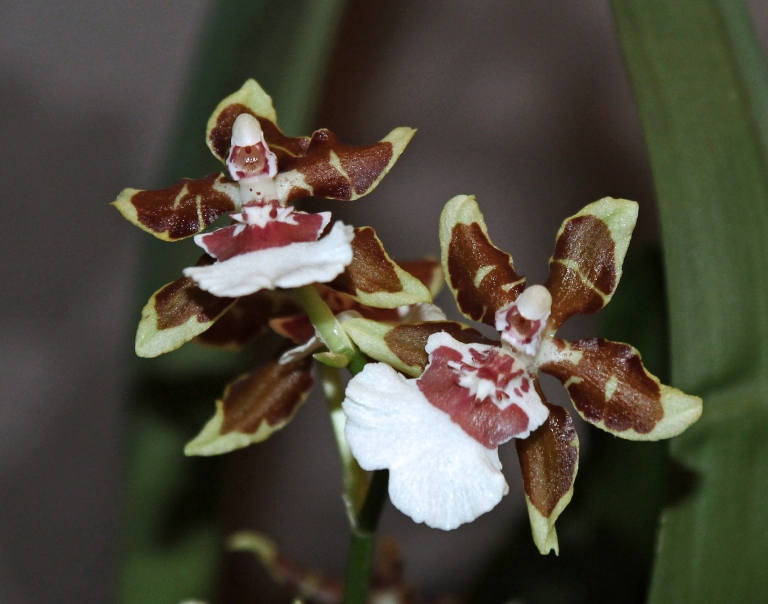 small orchids