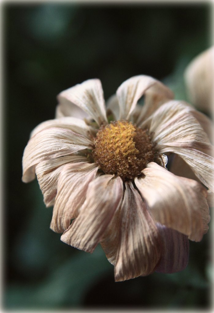 decay flower