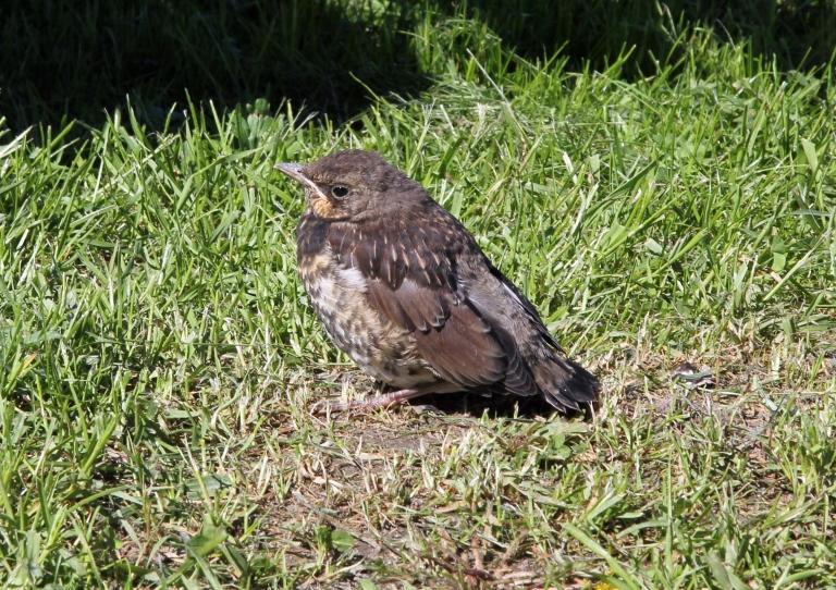 poor birdie