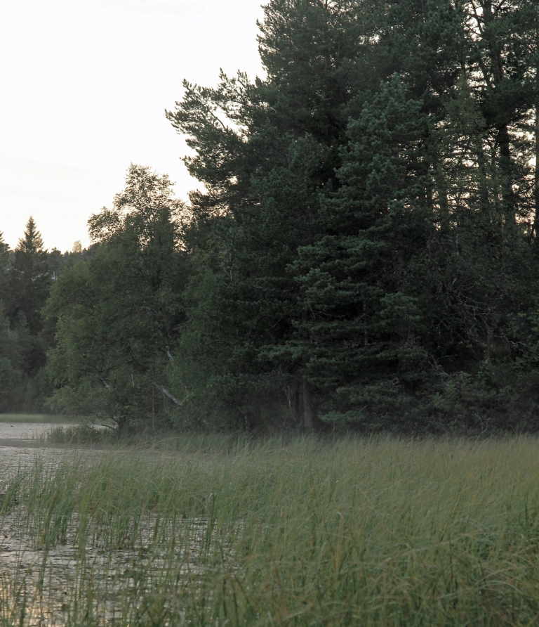 hazy evening by the pond