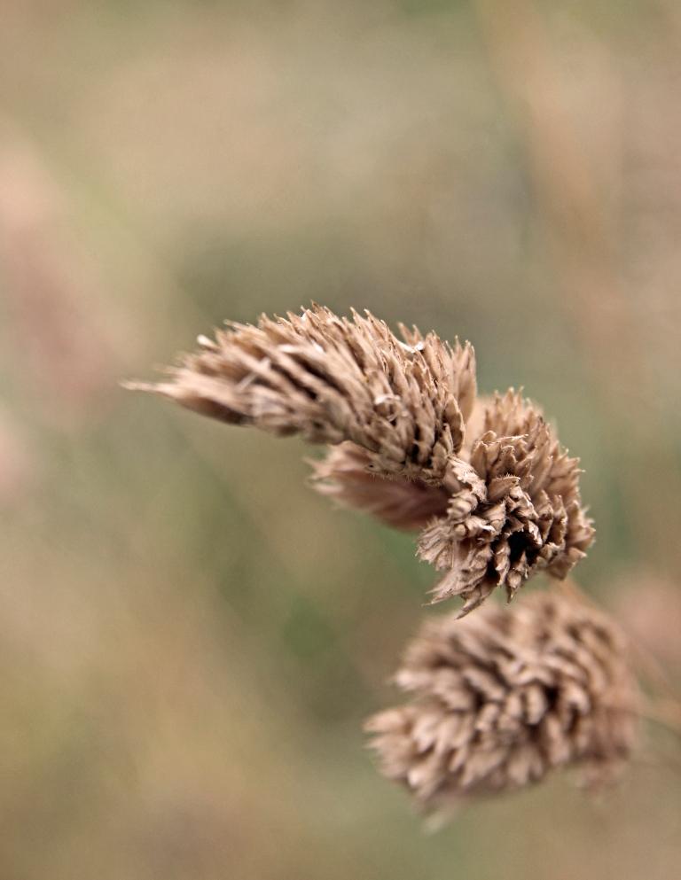 autumn straw