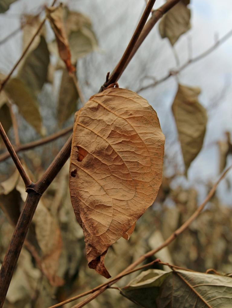 leaf among leaves 2