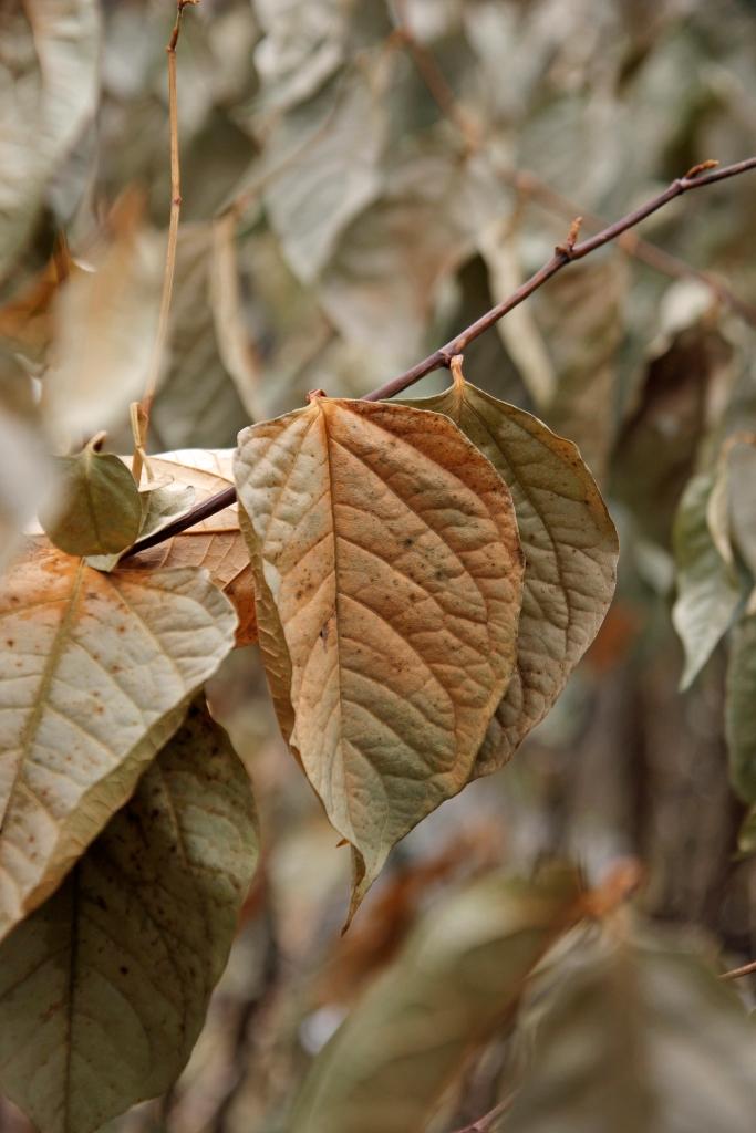 leaf among leaves