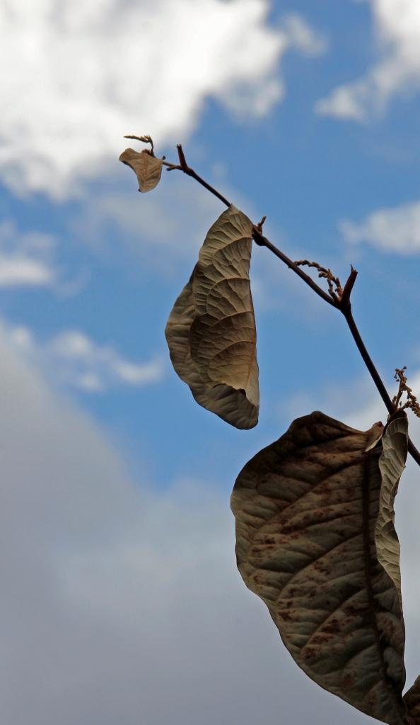 leaf towards the sky