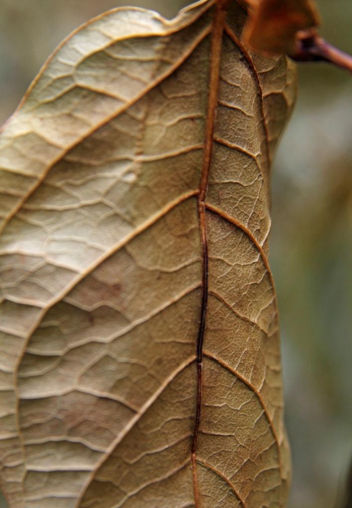 pale gold leaf