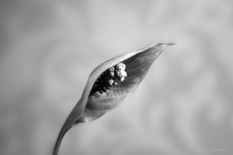 peace lily in bw1