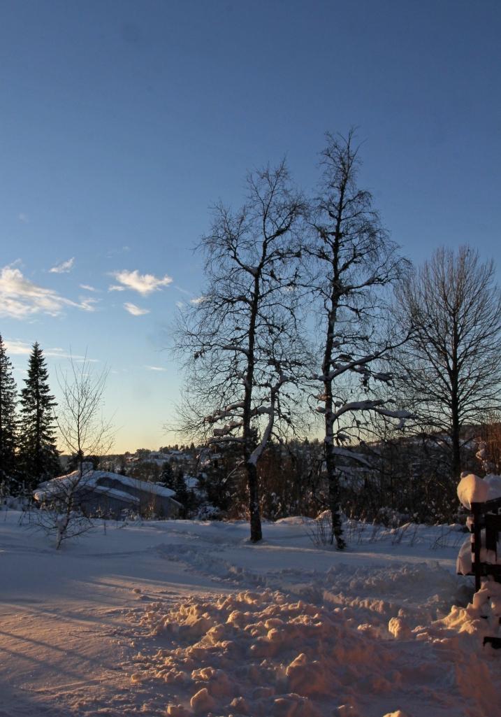 snow lovely snow