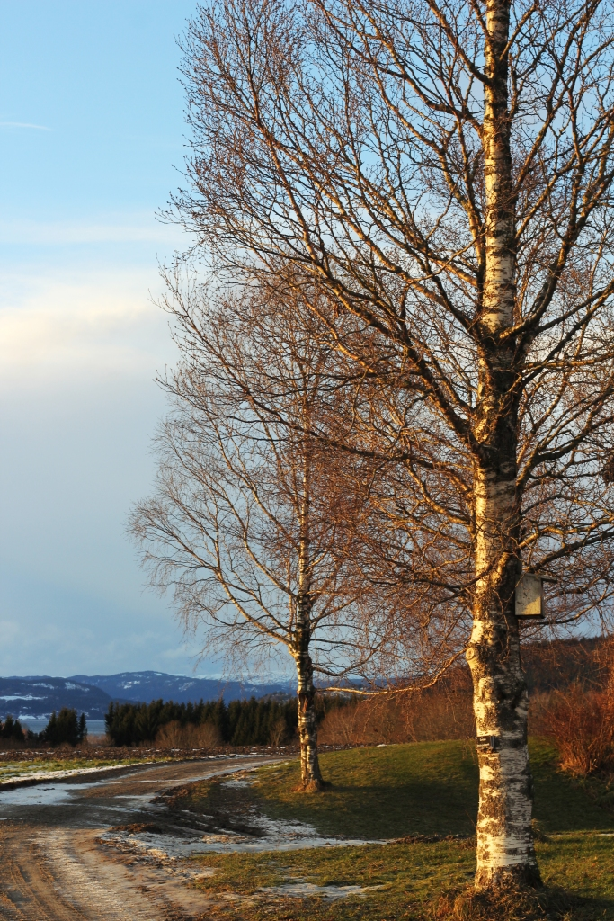 trees in the December sun