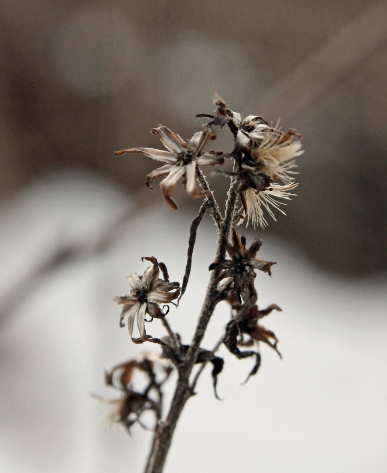dead flowers in January
