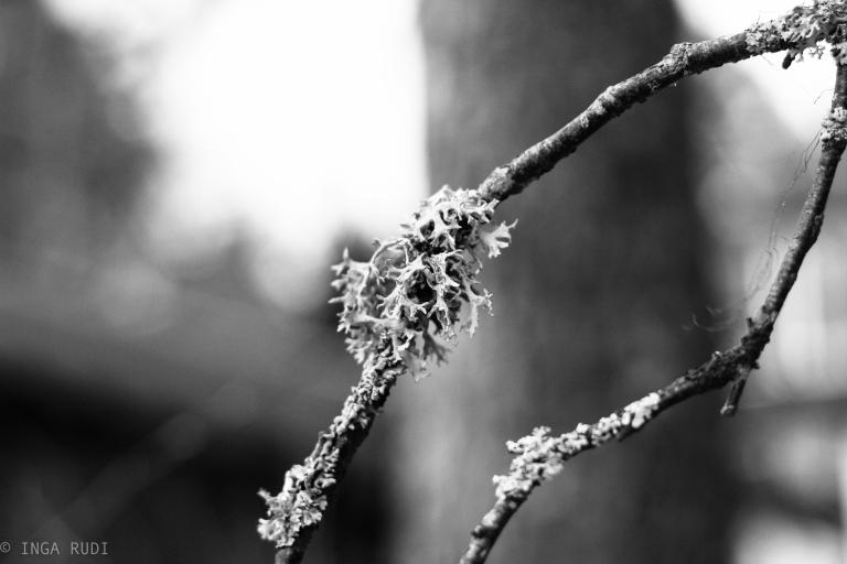 twig details