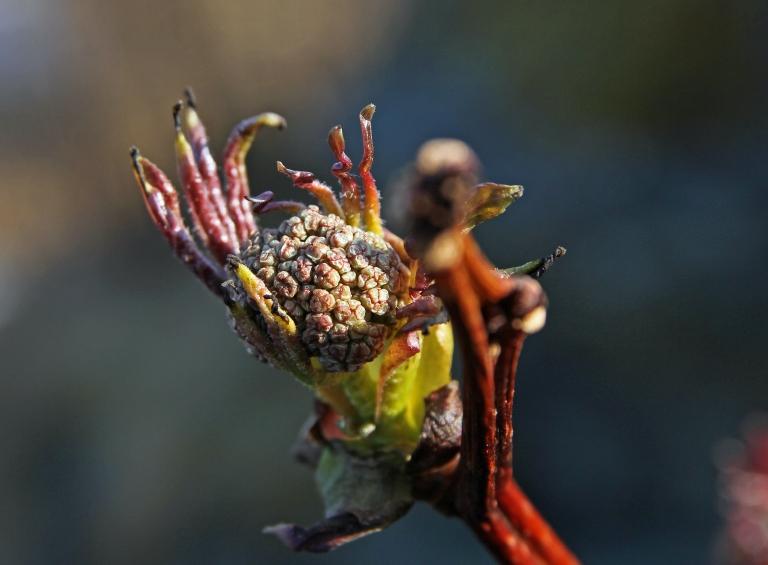 spring sign tree bud