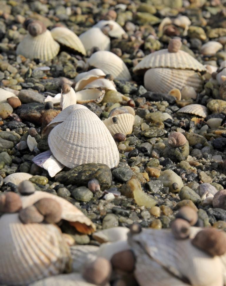 sea shells in the shoreline