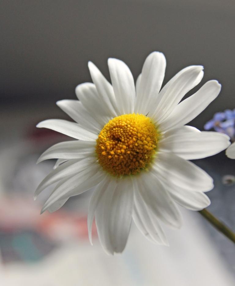First daisy