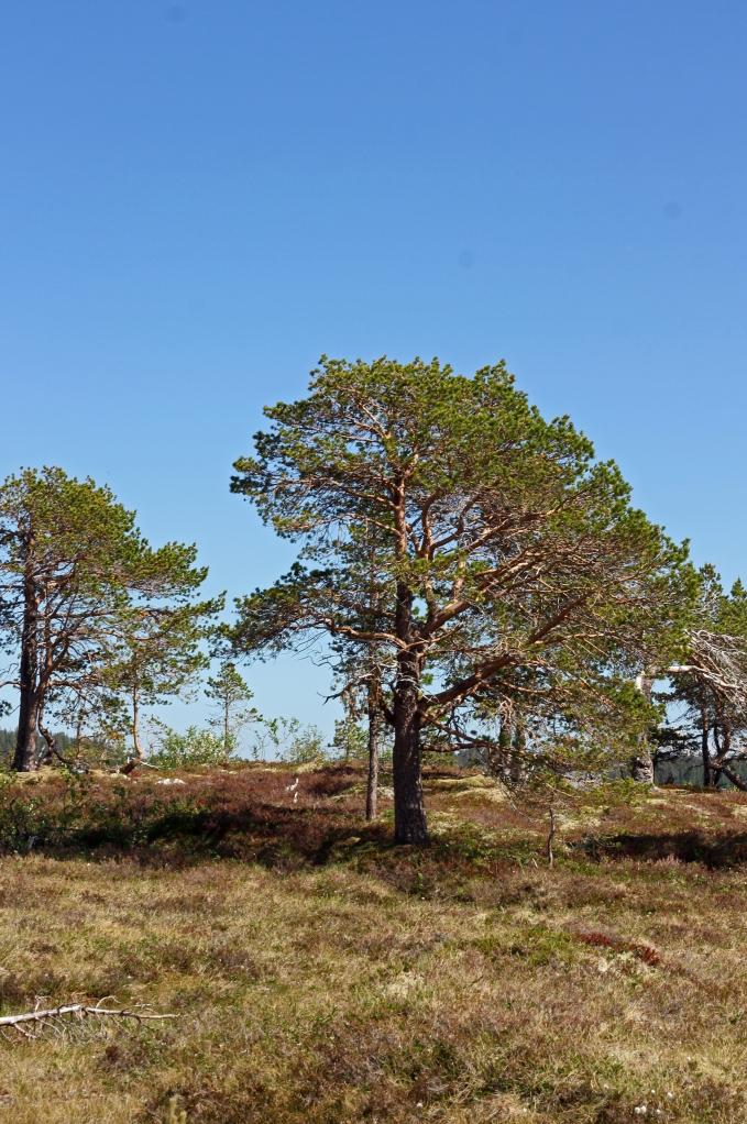 tree in dry landscape