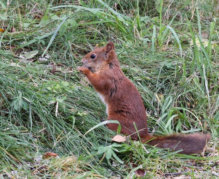 cute squirrel visiting