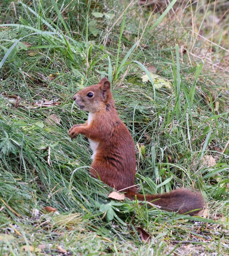 cute squirrel visiting2