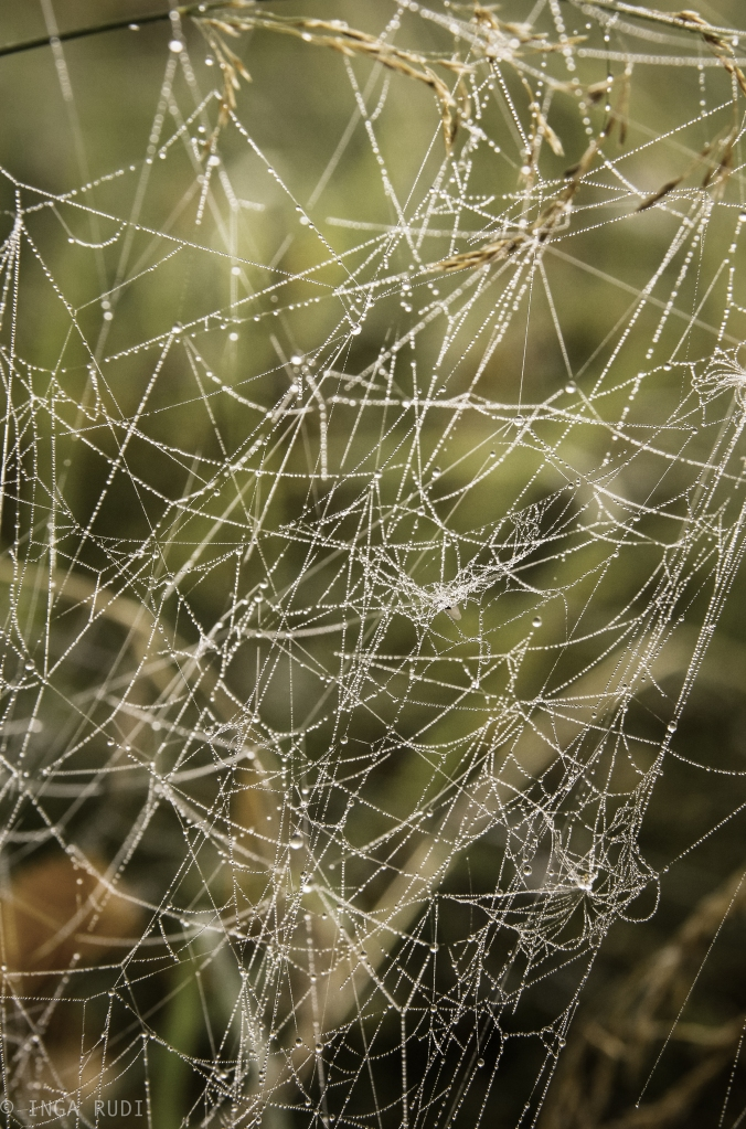 intricate cobwebs