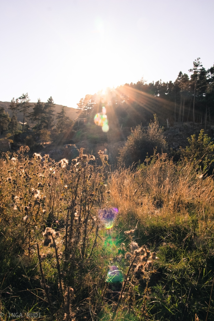 late summer afternoon light2