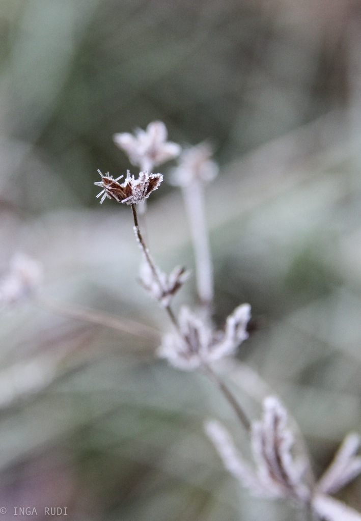 first frost3