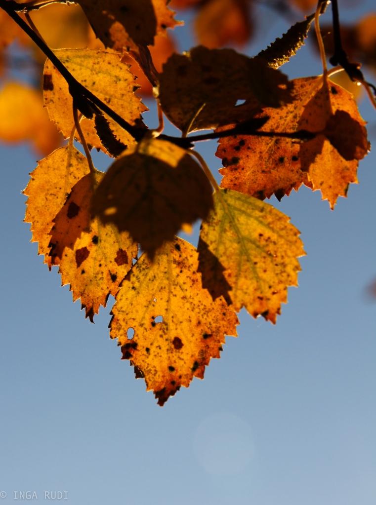 leaf october afternoon