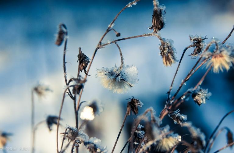 icy dead flowers vibrant preset