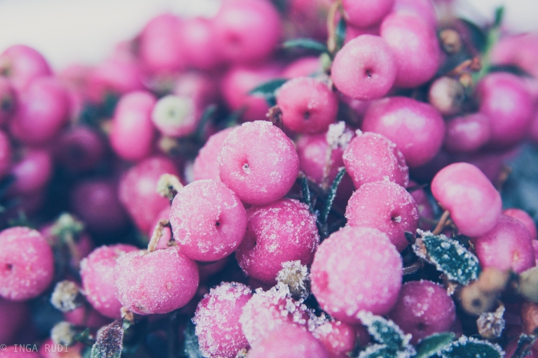 purple berries in the cold