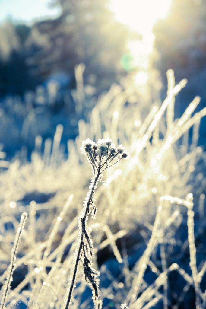 sunny winter field