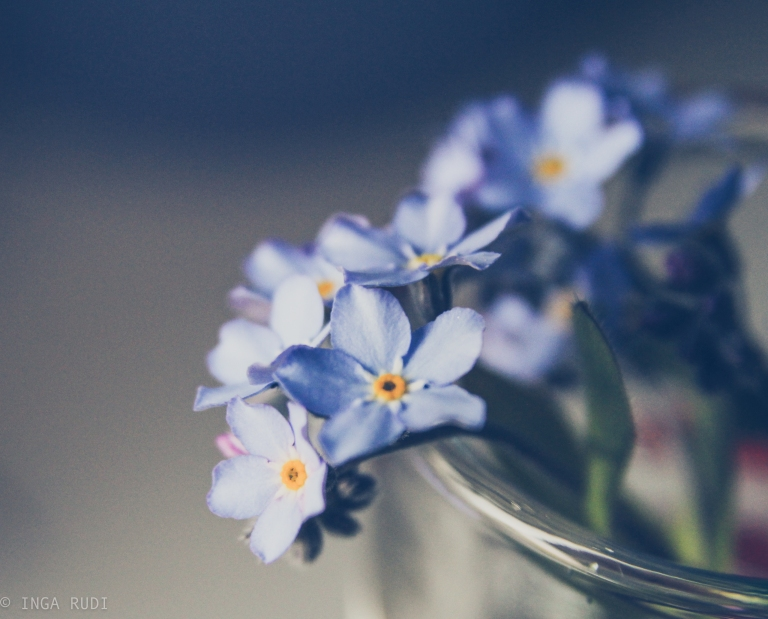 forget-me-nots 3