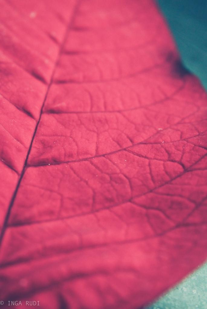 5 red leaf